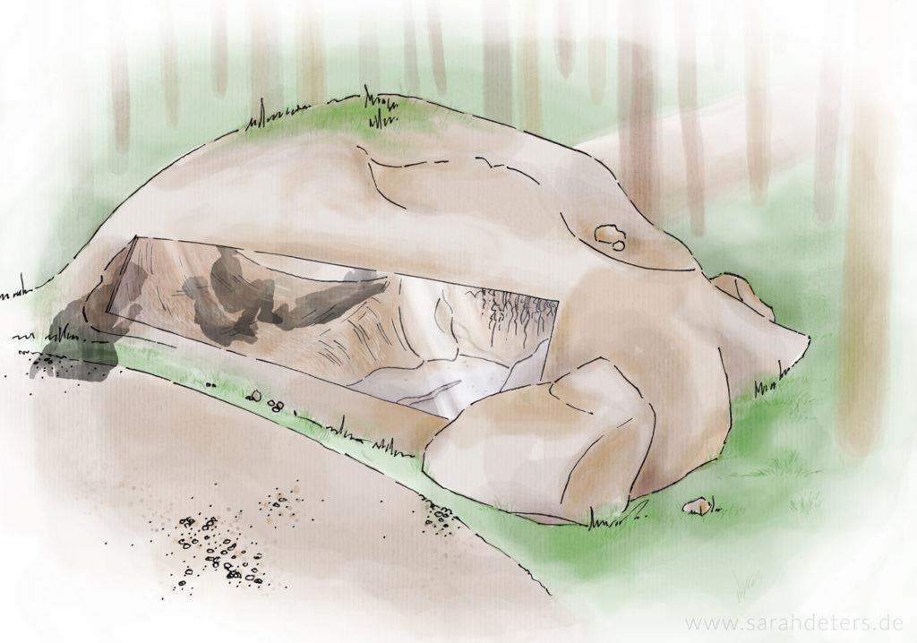 Natur-entdecker-pfad im BÄRENWALD Müritz Bärenhöhle Sarah Deters