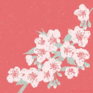 Cherry Blossom Illustration Sarah Deters