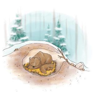 Bären Booklet Illustration Bärenhöhle Sarah Deters
