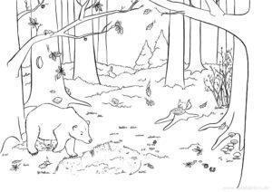 Malbuch Bär im Herbst Illustration Sarah Deters